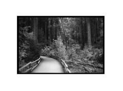 Path through Muir Woods (tomusan) Tags: arista400 film canon muirwoods redwoods path bw blackandwhite fence 35mm