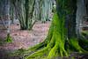 ent (pamelaadam) Tags: 2015 digital scotland spring march tyrebagger aberdeenshire plant tree fotolog thebiggestgroup