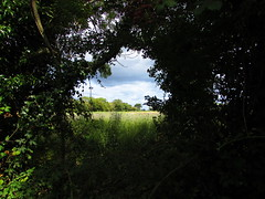 Wild Window (sam2cents) Tags: field meadow trees foliage undergrowth silhouette wicklow ireland august landscape sky