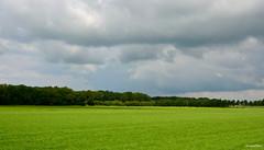 Landscape Forest (JaapCom) Tags: jaapcom landscape landed clouds wolken weiland trees wezep naturel natural holland dutchnetherlands forest
