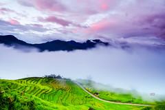 Binh Minh Ngai Thau (11) (Ngô_Hoàng_Giang) Tags: hoanggiang pentaxk3ii da15mm biểnmâyytý vietnam bìnhminh mây lúa