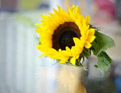 Sunny sunflower 🌻 (MadeleineVanWijkPhotography) Tags: 50mmprime nikond7000 closeup flower bright sunflower yellow