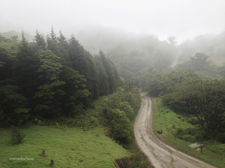 Bosque nuboso / Cloudy forest