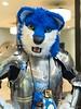 What the Fur 2017 - Conreeaght (Kakurady) Tags: wolf blue valrusthetiger male whatthefur wtfur armor armour platearmour platearmor knight pointeclaire quebec canada