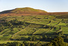 Calver hill, Reeth, Swaledale (Keartona) Tags: calverhill reeth northyorkshire yorkshiredales dales yorkshire england hill september landscape morning fields pattern patchwork countryside rural beautiful scenery view grinton green sunny