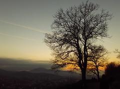 Domingo no parque (Claudia Mendes2015) Tags: natureza parque árvore árvores paisagem urbano entardecer