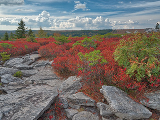 Building Cumulus Clouds at Dolly Sods