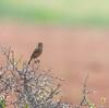Rock chat (Mohsan Raza Ali Baloch) Tags: mohsan raza ali mohsans nature birds islamabad pakistan