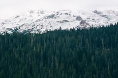 (JuanCarViLo) Tags: national park mount rainier mountain wilderness green trees fair wild snow