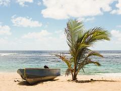Plage du Souffleur [La Désirade, Guadeloupe] Avril 2017 Olympus OM-D E-M5 Mark II + Panasonic 25/1.7 (wylOou) Tags: 042017 2017 dom avril guadeloupe trip vacances voyage île