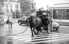 Horse Powered Fun (Emil de Jong - Kijklens) Tags: kijklens kijkenmetkijklens zwartwit fotografioe photography gors paard rijtuig tourist toerisme toerist zebrapad zebra crossing rain regen weather weer bui tram taxi blackandwhite