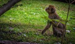 Tierpark Gera (Scooty0981) Tags: affe bison schildkröte gera tierpark germany europa natur nikon d7200 deutschland monkey turtle