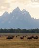 Bison grazing in the shadow of Grand Teton (sbuckinghamnj) Tags: grandtetonnationalpark grandteton grandtetons wyoming bison buffalo mammal wildlife mountain nationalpark