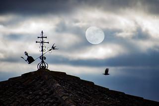Luna mangante