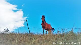 Sırt'ın Atları