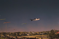 Bondi Beach on #35mm film. (georgie pics) Tags: animal nature whale sky pink purple dusk sunset sunshine summer australianbeaches bondiicebergs icebergsbondi australia bondibeach bondi beach kites kitefestival 35mm
