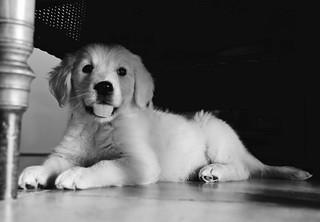 Cachorro......