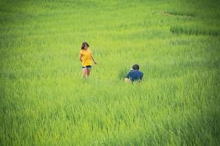 doi inthanon - thailande 69