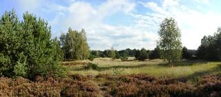 Revier Gorin Sommer 2017 Schönower Heide