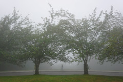 A foggy walk in the park today. Autumn is in the air. (mwhitney-hall) Tags: foggy trees park