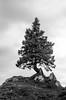 Arbre - Velika Planina (Arnaud Regnier) Tags: arbre tree velika planina montagne nb bw noir et blanc black white pentax k50 slovénie slovenija