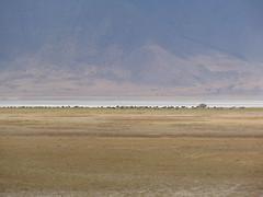 DSC00381 (francy_lioness) Tags: safari jeep animals animali ippopotami leone savana gnu elefante iena pumba tanzaniasafari ngorongorocratere gazzella antilope leonessa lioness facocero