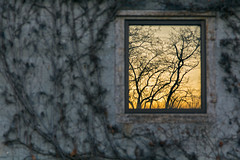 Focus On Reflection (matthewkaz) Tags: building ivy vine vines window sunset reflection glass trees tree wall reflections lansing winter inghamcounty michigan 2017
