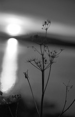 Bokeh at the edge of darkness - HMBT.  Explore thanks (Jo Evans1 - off and on for a while) Tags: mono bokeh thursday skeleton plant sunset light reflected water