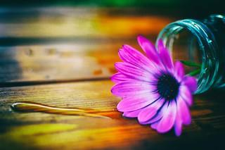 # 37 / 52, Végétal-fleur colorée