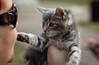 IMG_2649 (kz1000ps) Tags: boston massachusetts bostoncommon common park cats kitties kittens felines caturday purr catcafe brighton humane society adoptions