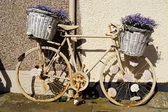 Bikes of Pittenweem (smcneem) Tags: pittenweem eastneuk bicycles decoratedbicycles decoratedbikes scallops seashells basketsofflowers rustybike paintedbike