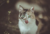 Hey kitty (Vagelis Pikoulas) Tags: cat kitten pet canon 6d tamron 70200mm vc bokeh animal cute beautiful