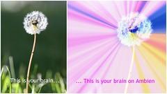 No title necessary (Kerri Lee Smith) Tags: dandelion ambien weeds plants grass rainbow