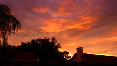 Hurricane Irma Sunset (Jim Mullhaupt) Tags: hurricane irma sunset sundown dusk sun evening endofday sky clouds color red gold orange pink yellow blue tree palm outdoor silhouette weather tropical exotic wallpaper landscape nikon coolpix p900 bradenton florida manateecounty jimmullhaupt cloudsstormssunsetssunrises storm stormclouds