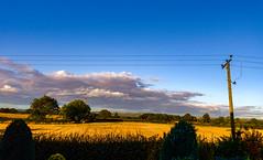 Wilberfoss Sky