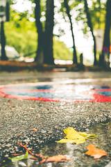 no parking for autumn leaves (mripp) Tags: art kunst vintage retro old street strase brussels brüssel autumn herbst laub moody leica m10 summieren 50mm belgium belgien europa europe colors colour weather wetter rain rainy urban city stadt