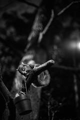 Dark in night (etc_cocodante) Tags: singapore zoo nightsafari df nikon ais prime 12 50mm animal bw black white