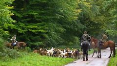 Vénerie (Phil du Valois) Tags: venerie veneur meute chasse forêt compiègne domaniale courre