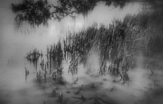Discovering a Magical Kingdom (JDS Fine Art Photography) Tags: ocean roots treeroots bw monochrome atmosphere haunting nature mist misty magical
