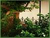 Dans le patio de la Casa Xanxo de Perpignan (2) (bleumarie) Tags: centrevilledeperpignan centrevillehistorique centreville fujifinepix mariebousquet mididelafrance photobleumarie septembre2017 suddelafrance catalogne languedocroussillon méridional perpignan pyrénéesorientales quartier roussillon urbain ville