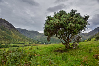 View of Wasdale Head