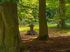 Virginia Water Lake E8050379_02 (tony.rummery) Tags: contrajour em10 gardens mft microfourthirds mushroom omd olympus park shapes stilllife surrey trees trunks valleygardens virginiawater englefieldgreen england unitedkingdom gb