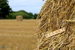 225/365 Needle in a Haystack