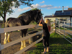 Big Ben (evawall95) Tags: clydesdale stallion farm horse
