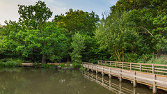 Connaught Water, Epping Forest (PhredKH) Tags: photosbyphredkh phredkh fredkh outdoorphotography outdoors canon canoneos canonphotography green trees grass connaughtwater connaught urbanparks parks londonparks dusk scenic eppingforest canon5dmkiii canoneos5dmarkiii 2470mm ef2470mmf4lisusm water splendid