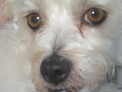 Muttley (Muttley 05) Tags: dogs muttley family closeup
