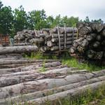 Log yard for illegal logging thumbnail