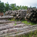 Log yard for illegal logging