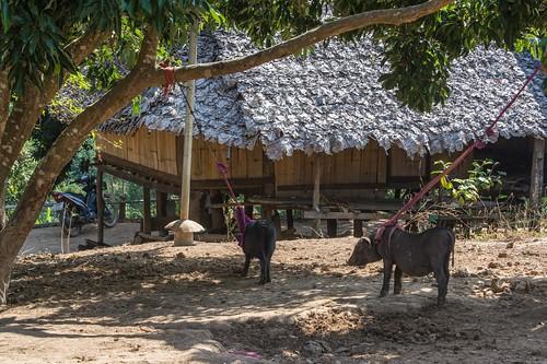 trekking chiang mai - thailande 19