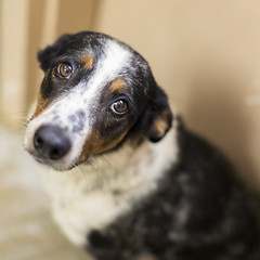 I want to know what love is....I want you to show me.... (Boomingecho) Tags: shelter animalshelter canine dog shelterdog adoptdontshop spay neuter saddog littledoglaughedstories